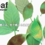 温度を色で見るミヤビ感☆ ちょっと優雅な風情が感じられるサーモメーター「Leaf Thermometer」