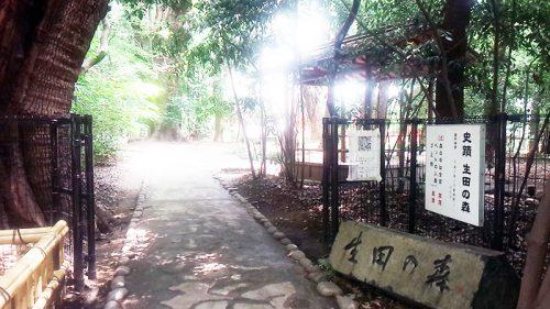 生田の森3