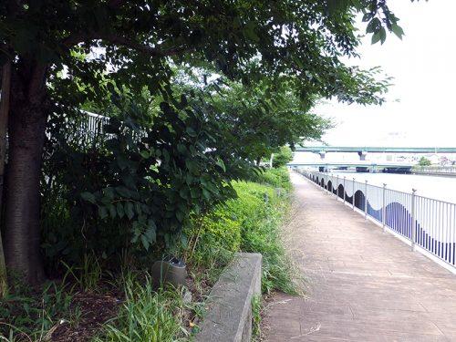 大阪水辺散歩10
